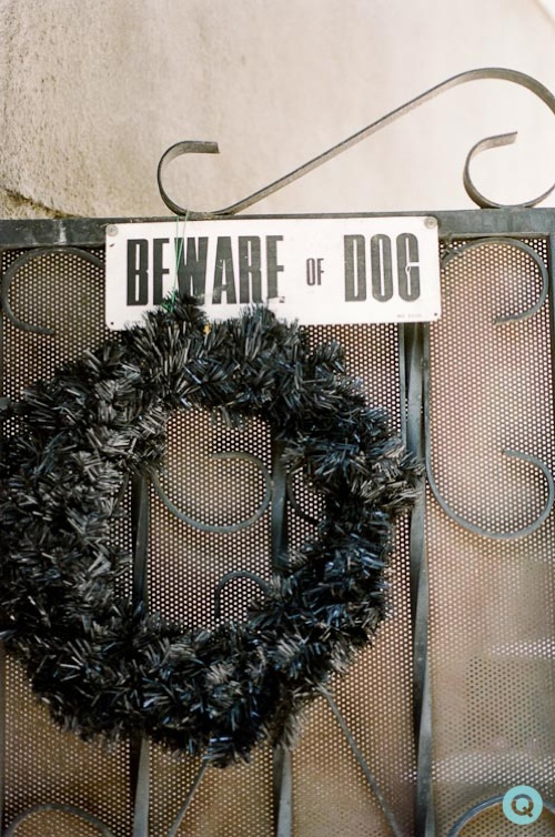 beware of dog tm holiday gre