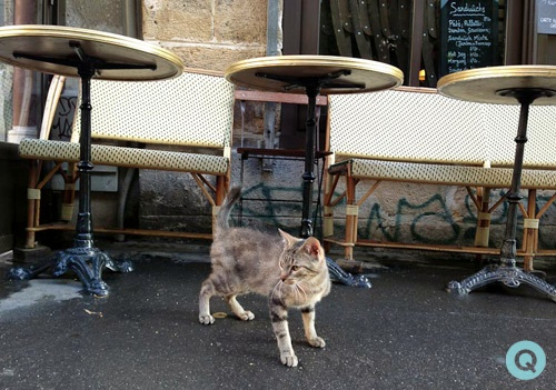 French-Chat