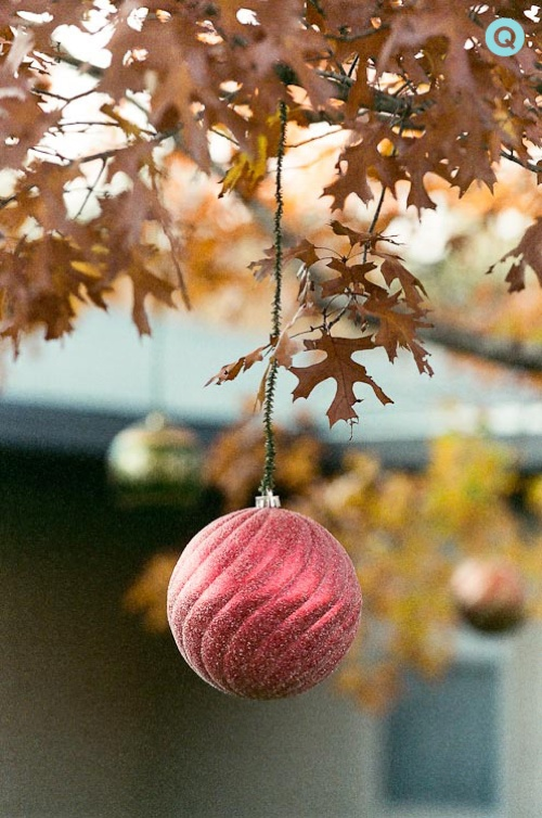 Red-Ornament-Autumn